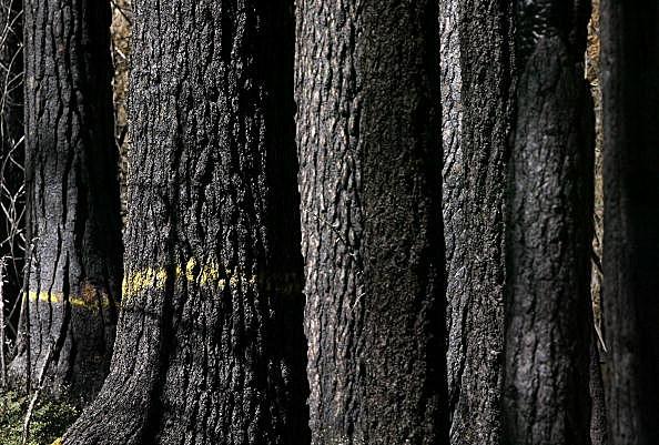 Logging in Sweeney Creek