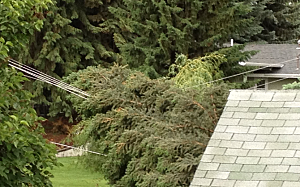 Fallen Tree on Power Line