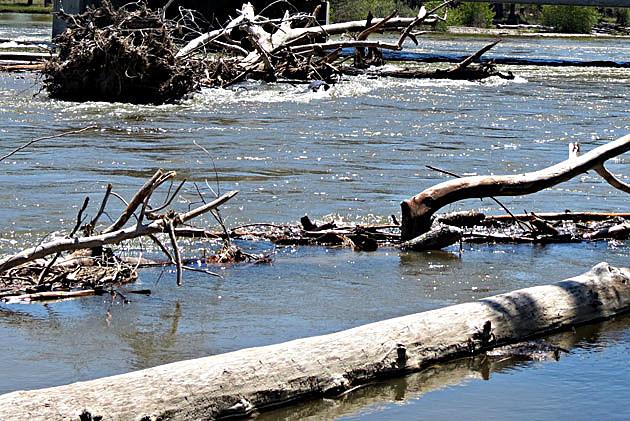 Bitterroot River Debris