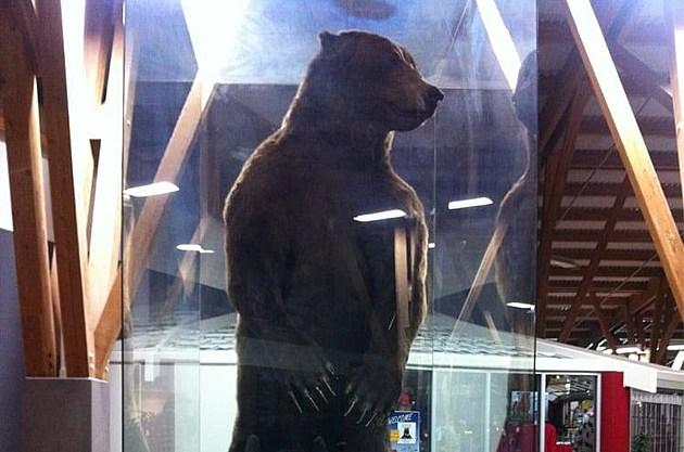 Airport bear 2 - Facebook